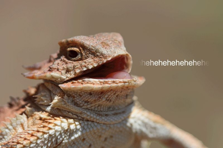 laughing lizard | image tagged in laughing lizard | made w/ Imgflip meme maker