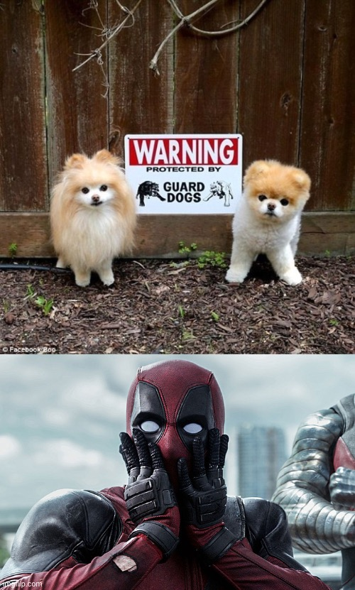 OH NO! WHAT WILL I EVER DO! | image tagged in deadpool - gasp | made w/ Imgflip meme maker
