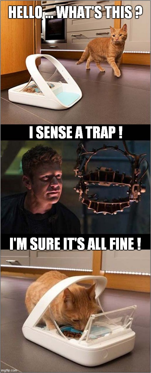 Cat Feeder Saw Trap |  HELLO ... WHAT'S THIS ? I SENSE A TRAP ! I'M SURE IT'S ALL FINE ! | image tagged in fun,cats,feeding,saw | made w/ Imgflip meme maker