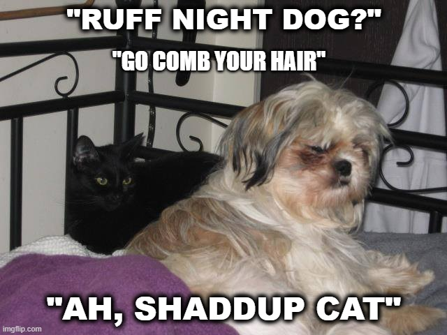 "Bug |  ""RUFF NIGHT DOG?""; ""GO COMB YOUR HAIR""; ""AH, SHADDUP CAT"" 