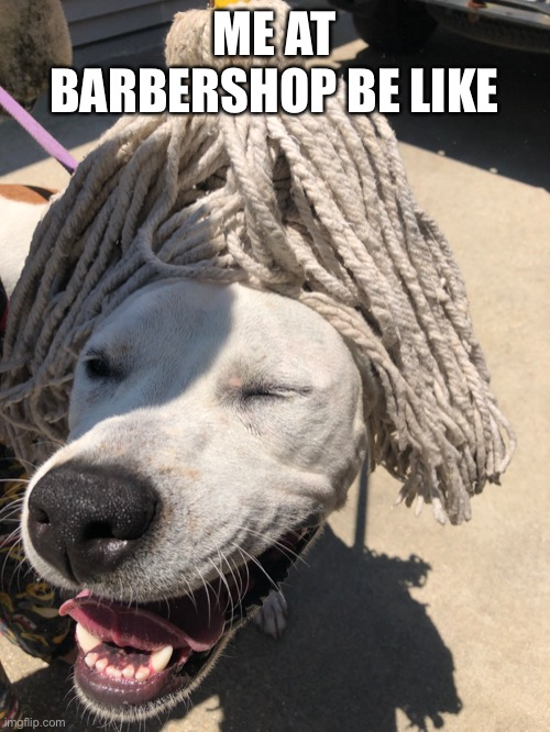 Doggo hairdo |  ME AT BARBERSHOP BE LIKE | image tagged in hairstyle,dogs,funny memes,meme | made w/ Imgflip meme maker