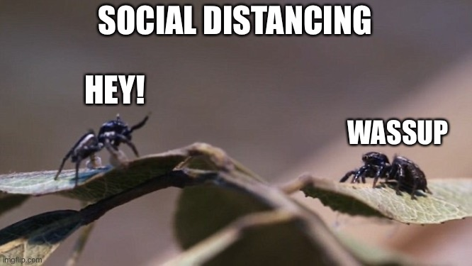 Social distancing with spiders |  SOCIAL DISTANCING; HEY! WASSUP | image tagged in social distancing,spiders | made w/ Imgflip meme maker