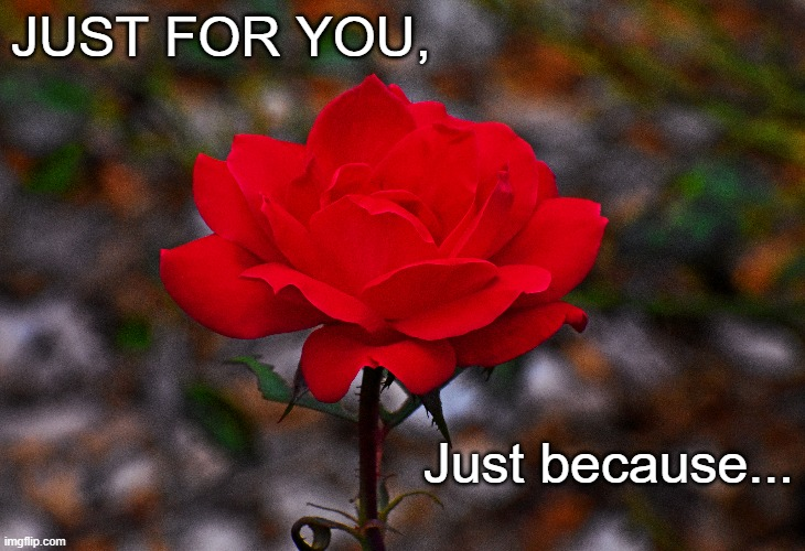 When words aren't enough 001 |  JUST FOR YOU, Just because... | image tagged in inspiration,rose | made w/ Imgflip meme maker