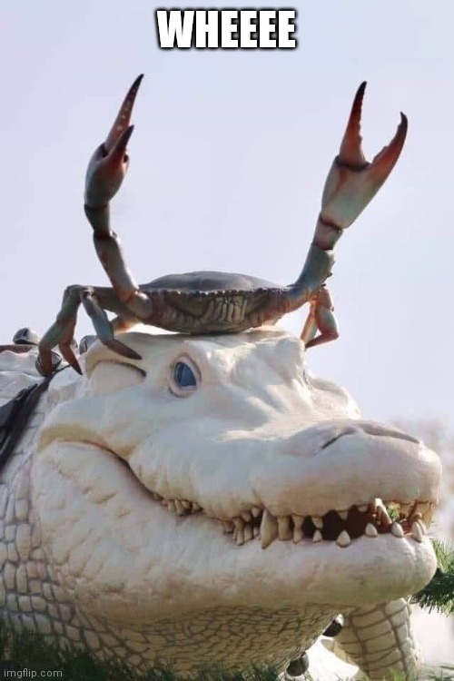 Crab on Crocodile |  WHEEEE | image tagged in crab on crocodile | made w/ Imgflip meme maker