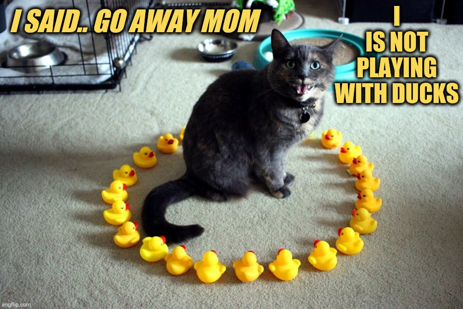 Go away |  I IS NOT PLAYING WITH DUCKS; I SAID.. GO AWAY MOM | image tagged in meme,cat,go away mom,embarrassing,ducks,secret | made w/ Imgflip meme maker