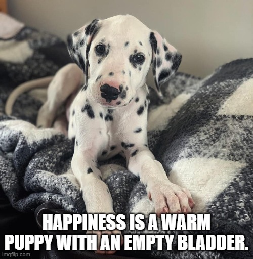 Spot the Dog |  HAPPINESS IS A WARM PUPPY WITH AN EMPTY BLADDER. | image tagged in cute puppy | made w/ Imgflip meme maker