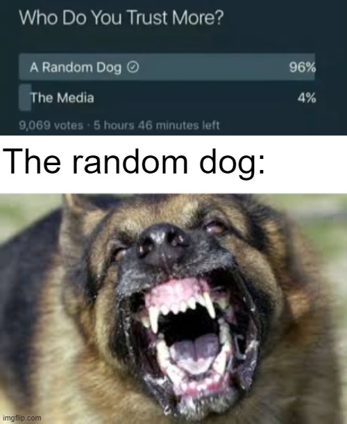The random dog: | image tagged in angry dog,trust,trust issues | made w/ Imgflip meme maker