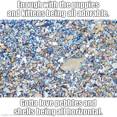 Cute pebbles and shells |  Enough with the puppies and kittens being all adorable. Gotta love pebbles and shells being all horizontal. | image tagged in cute puppies,cute animals,cute kitten,soppy memes | made w/ Imgflip meme maker