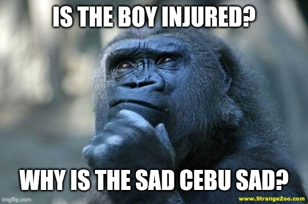 Deep Thoughts | IS THE BOY INJURED? WHY IS THE SAD CEBU SAD? | image tagged in deep thoughts | made w/ Imgflip meme maker