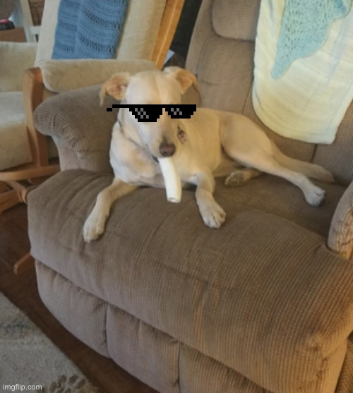 Angel Thug | image tagged in thug life,dog,angel | made w/ Imgflip meme maker