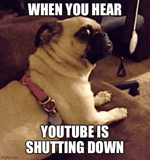 Did you hear? |  WHEN YOU HEAR; YOUTUBE IS SHUTTING DOWN | image tagged in scared dog,youtube,meme,pug or somethin,is probably a joke | made w/ Imgflip meme maker