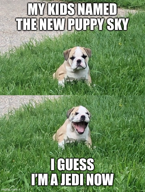 Jedi Bulldog |  MY KIDS NAMED THE NEW PUPPY SKY; I GUESS I'M A JEDI NOW | image tagged in jedi | made w/ Imgflip meme maker