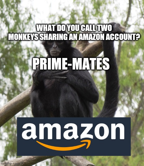 WHAT DO YOU CALL TWO MONKEYS SHARING AN AMAZON ACCOUNT? PRIME-MATES | image tagged in joke,monkey,amazon | made w/ Imgflip meme maker