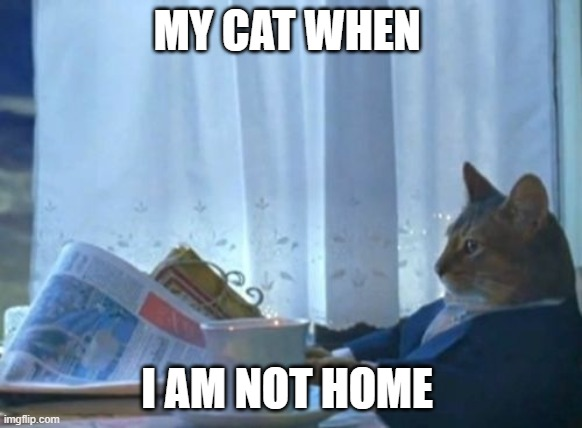 I Should Buy A Boat Cat |  MY CAT WHEN; I AM NOT HOME | image tagged in memes,i should buy a boat cat,cats,home alone,cats home,cats in suits s | made w/ Imgflip meme maker