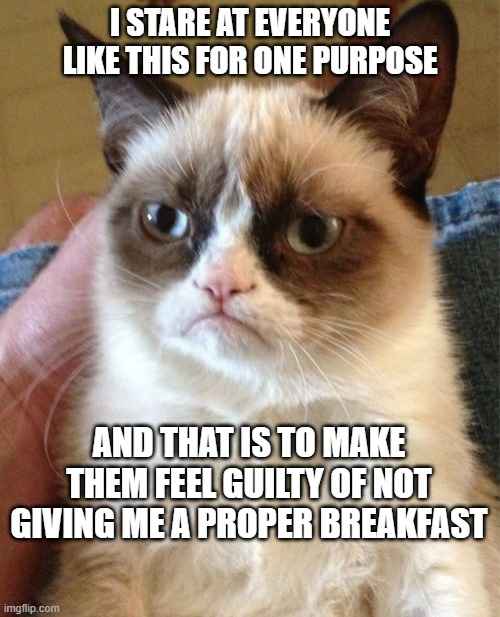 Grumpy Cat Meme |  I STARE AT EVERYONE LIKE THIS FOR ONE PURPOSE; AND THAT IS TO MAKE THEM FEEL GUILTY OF NOT GIVING ME A PROPER BREAKFAST | image tagged in memes,grumpy cat | made w/ Imgflip meme maker