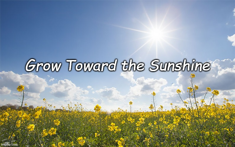 Sunshine |  Grow Toward the Sunshine | image tagged in sunshine,flowers,happiness | made w/ Imgflip meme maker