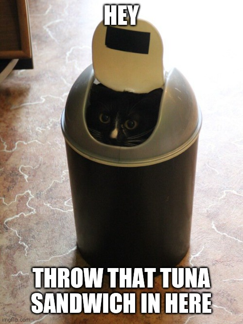 KITTY WILL TAKE ANY FOOD YOU THROW OUT |  HEY; THROW THAT TUNA SANDWICH IN HERE | image tagged in cats,funny cats | made w/ Imgflip meme maker
