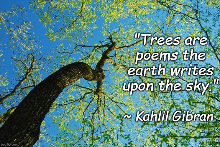 "Sky Poems |  ""Trees are poems the earth writes upon the sky.""; ~ Kahlil Gibran 