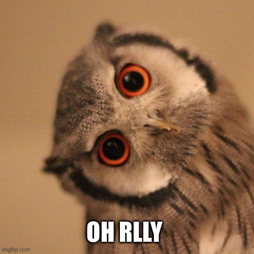 inquisitve owl | OH RLLY | image tagged in inquisitve owl | made w/ Imgflip meme maker