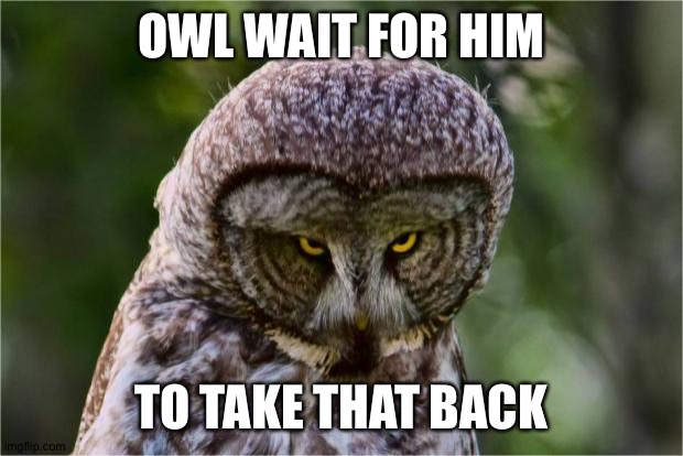 Seriously Owl | OWL WAIT FOR HIM TO TAKE THAT BACK | image tagged in seriously owl | made w/ Imgflip meme maker