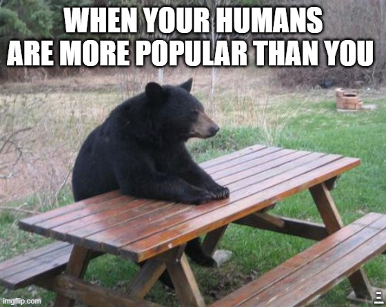 If you don't get it, the answer is right in front of you. |  WHEN YOUR HUMANS ARE MORE POPULAR THAN YOU; HINT: BAD LUCK BEAR | image tagged in memes,bear,bad luck bear,bad luck | made w/ Imgflip meme maker