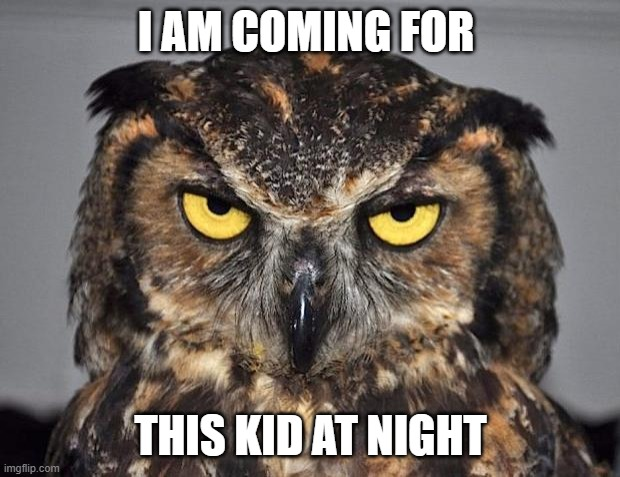 angry owl | I AM COMING FOR THIS KID AT NIGHT | image tagged in angry owl | made w/ Imgflip meme maker