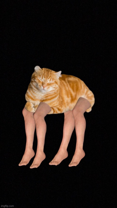 Do what you will with this | image tagged in cats,legs,photoshop | made w/ Imgflip meme maker
