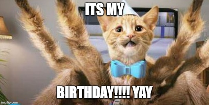 The Cats Birthday Imgflip Watch more 'happy birthday memes' videos on know your meme! the cats birthday imgflip