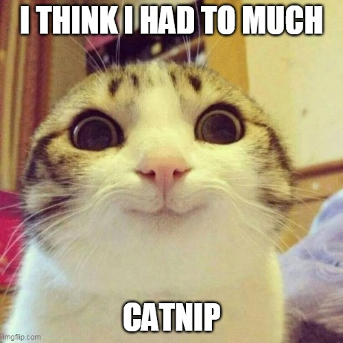 cats and catnip |  I THINK I HAD TO MUCH; CATNIP | image tagged in memes,smiling cat | made w/ Imgflip meme maker