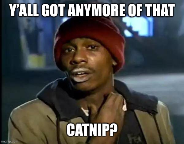 Y'all Got Any More Of That Meme | Y'ALL GOT ANYMORE OF THAT CATNIP? | image tagged in memes,y'all got any more of that | made w/ Imgflip meme maker