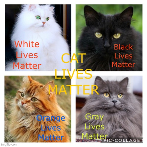 image tagged in cat lives matter | made w/ Imgflip meme maker