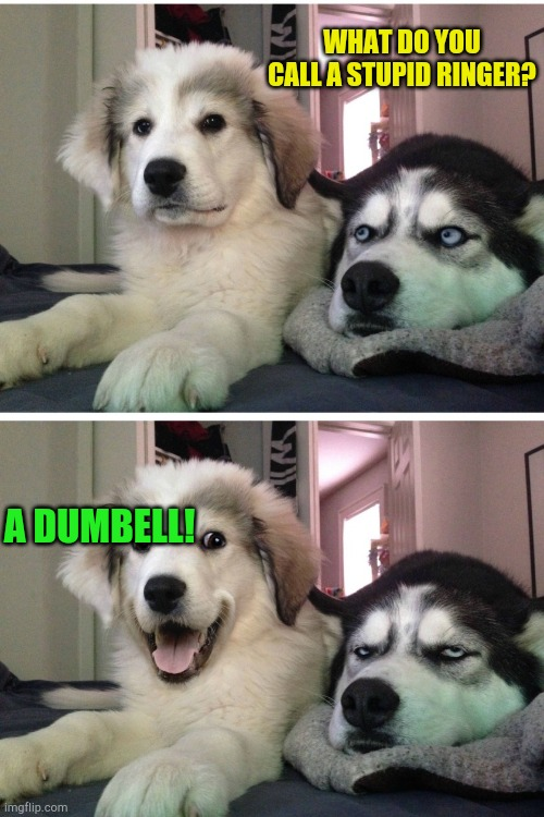 Bad pun dogs |  WHAT DO YOU CALL A STUPID RINGER? A DUMBELL! | image tagged in bad pun dogs | made w/ Imgflip meme maker