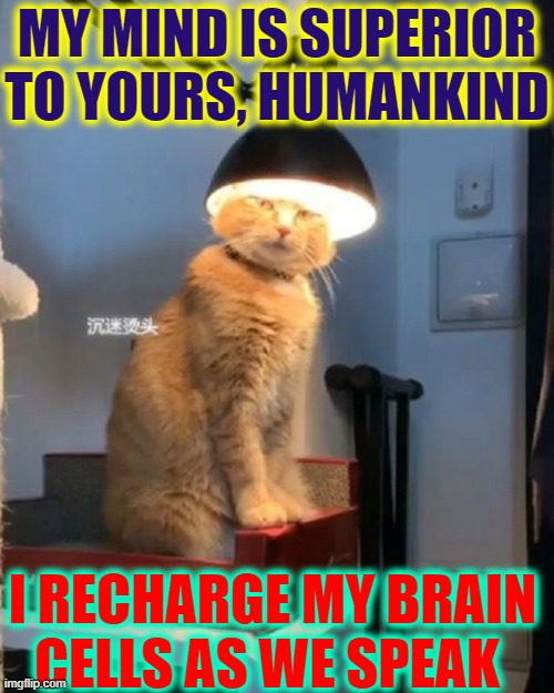 I Am Master of all I Survey! |  MY MIND IS SUPERIOR TO YOURS, HUMANKIND; I RECHARGE MY BRAIN CELLS AS WE SPEAK | image tagged in vince vance,cats,brains,i love cats,cats are awesome,funny cat memes | made w/ Imgflip meme maker