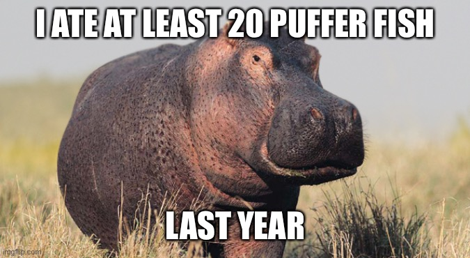 Hippo | I ATE AT LEAST 20 PUFFER FISH LAST YEAR | image tagged in hippo | made w/ Imgflip meme maker