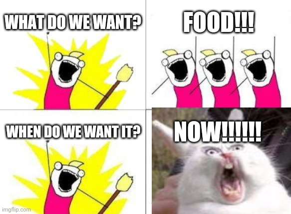 I personally love food |  WHAT DO WE WANT? FOOD!!! WHEN DO WE WANT IT? NOW!!!!!! | image tagged in hungry | made w/ Imgflip meme maker