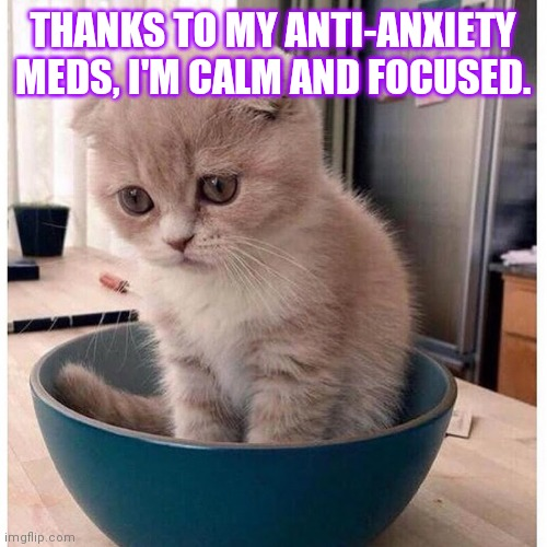 Calm, focused, and ready for another day of being calm and focused. |  THANKS TO MY ANTI-ANXIETY MEDS, I'M CALM AND FOCUSED. | image tagged in sad kitten in food bowl,memes,calm and focused,thanks | made w/ Imgflip meme maker