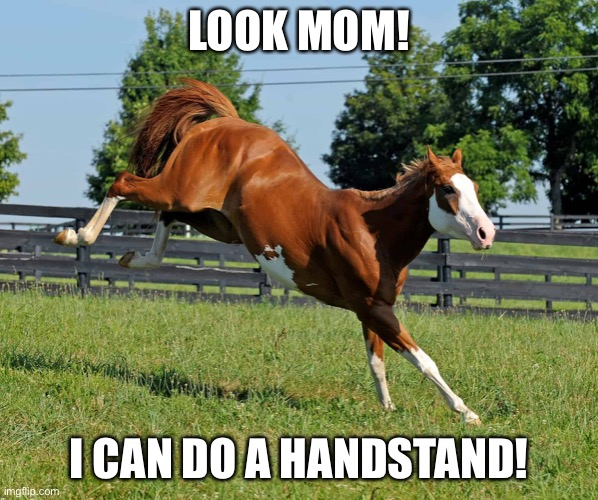 LOOK MOM! I CAN DO A HANDSTAND! | image tagged in funny,horse | made w/ Imgflip meme maker
