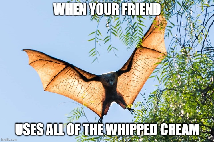 bat meme |  WHEN YOUR FRIEND; USES ALL OF THE WHIPPED CREAM | image tagged in funny,animal,bat | made w/ Imgflip meme maker