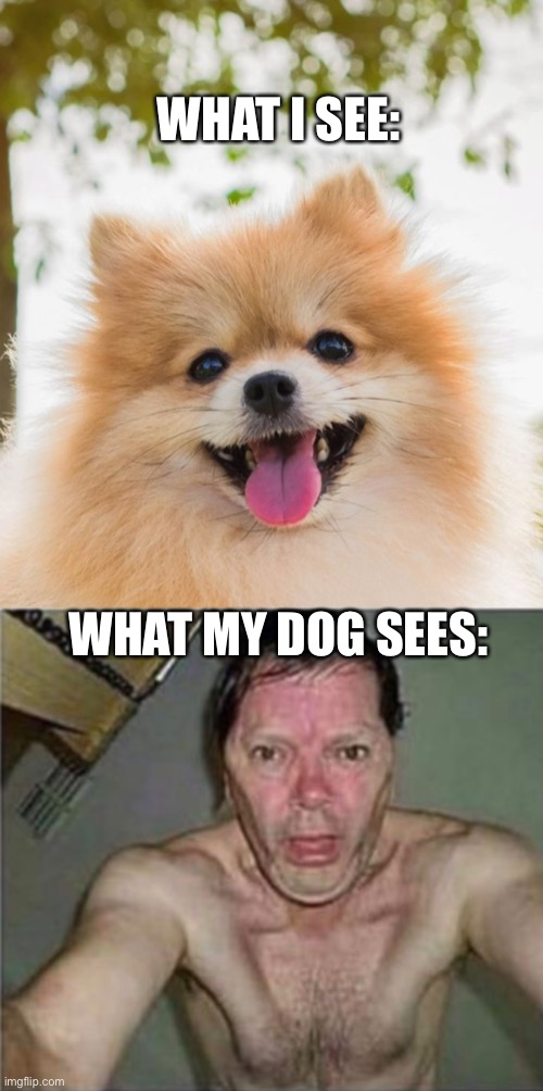 #DogeLife |  WHAT I SEE:; WHAT MY DOG SEES: | image tagged in bad pun dog | made w/ Imgflip meme maker