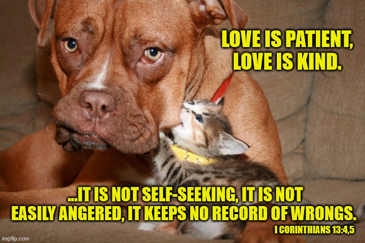 LOVE IS PATIENT, LOVE IS KIND. ...IT IS NOT SELF-SEEKING, IT IS NOT EASILY ANGERED, IT KEEPS NO RECORD OF WRONGS. I CORINTHIANS 13:4,5 | image tagged in funny memes,holy bible,love,god is love,jesus saves | made w/ Imgflip meme maker