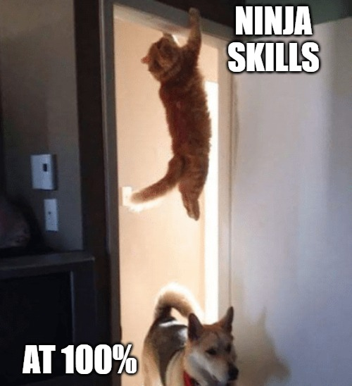 Ninja Skills |  NINJA SKILLS; AT 100% | image tagged in cats,memes,fun,funny,dogs,ninja | made w/ Imgflip meme maker