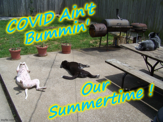 No Bummin' Summer |  COVID Ain't  Bummin'; Our  Summertime ! | image tagged in meme,memes,funny memes,covid19,dogs,summer | made w/ Imgflip meme maker