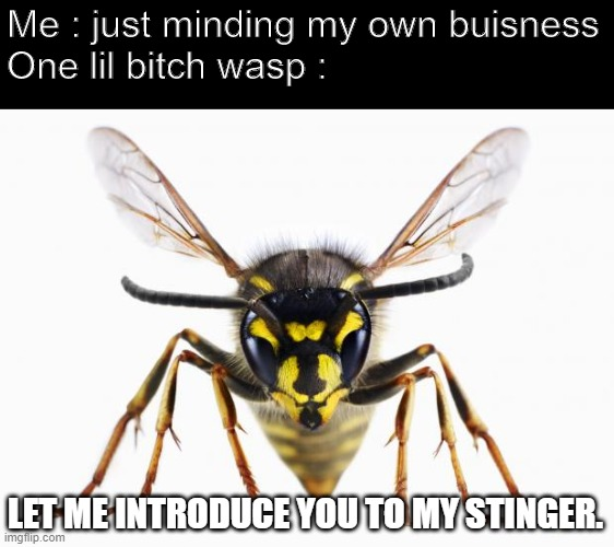 I just hate this... |  Me : just minding my own buisness One lil bitch wasp :; LET ME INTRODUCE YOU TO MY STINGER. | image tagged in scumbag wasp,lil bitch | made w/ Imgflip meme maker