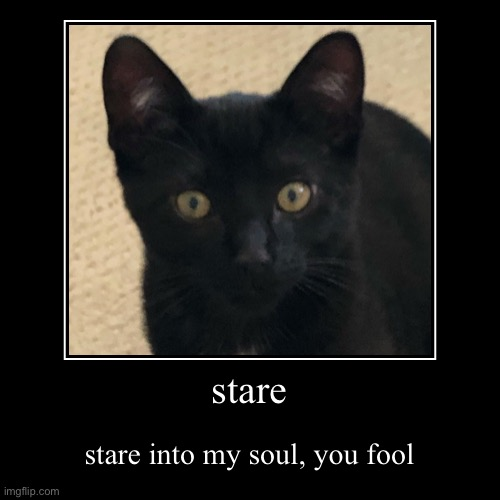 stare into my soul | stare | stare into my soul, you fool | image tagged in funny,demotivationals,cat,creepy | made w/ Imgflip demotivational maker