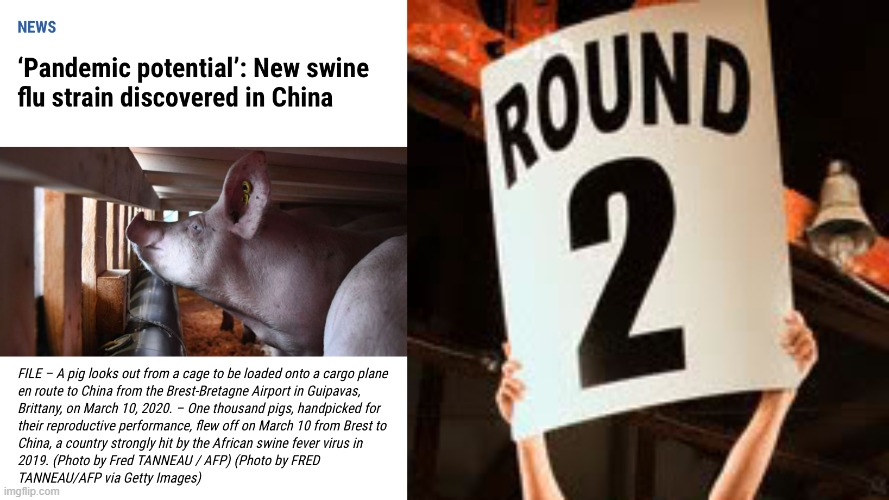 Round 2 | image tagged in swine flu,pandemic,china | made w/ Imgflip meme maker