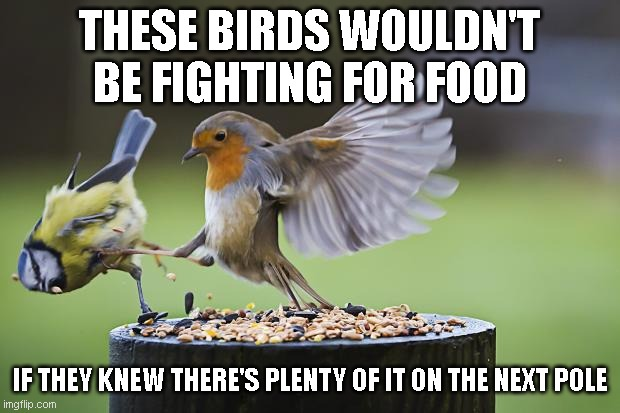 Take this as an economy lesson: don't start a fight for resources, make the competition irrelevant. |  THESE BIRDS WOULDN'T BE FIGHTING FOR FOOD; IF THEY KNEW THERE'S PLENTY OF IT ON THE NEXT POLE | image tagged in seeds bird | made w/ Imgflip meme maker
