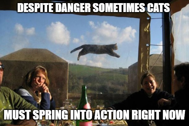 Time for Action |  DESPITE DANGER SOMETIMES CATS; MUST SPRING INTO ACTION RIGHT NOW | image tagged in memes,cats,fun,funny,action,danger | made w/ Imgflip meme maker