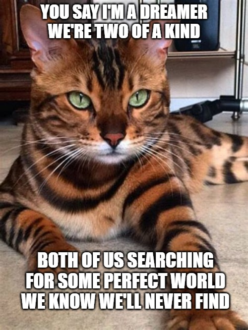 A Dreamer |  YOU SAY I'M A DREAMER WE'RE TWO OF A KIND; BOTH OF US SEARCHING FOR SOME PERFECT WORLD WE KNOW WE'LL NEVER FIND | image tagged in cats,memes,funny,dreamer,fun,perfect world | made w/ Imgflip meme maker