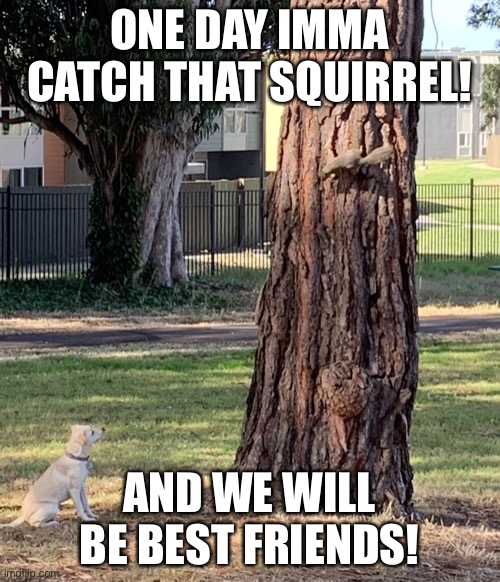 One day Imma catch that squirrel! |  ONE DAY IMMA CATCH THAT SQUIRREL! AND WE WILL BE BEST FRIENDS! | image tagged in squirrel,dog,cute,memes | made w/ Imgflip meme maker