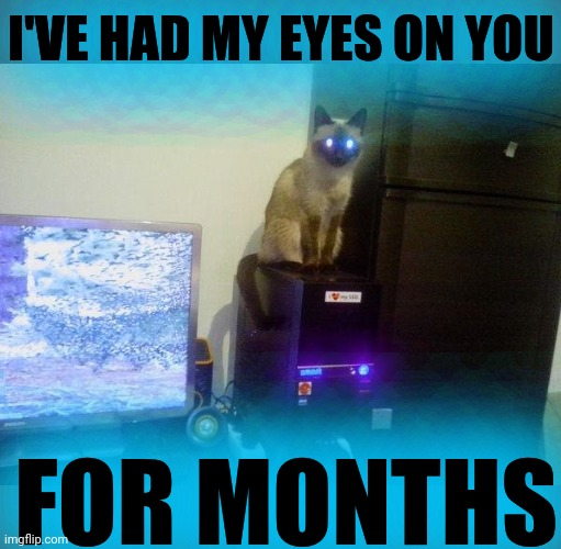 Internet Cat | I'VE HAD MY EYES ON YOU FOR MONTHS | image tagged in internet cat | made w/ Imgflip meme maker
